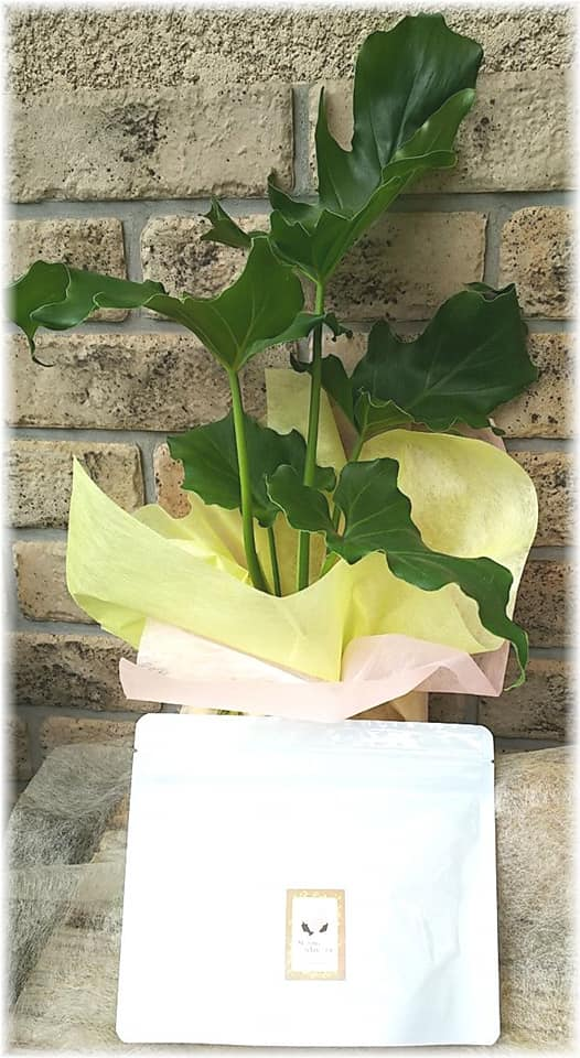 観葉植物とハーブティー